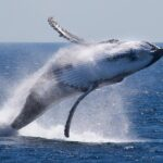 whale-watch[1]